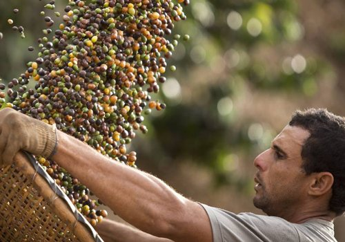 Investindo em qualidade, Estado do Rio de Janeiro vive um novo ciclo do café