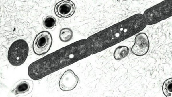 Cientistas podem ter sido contaminados por antraz nos EUA