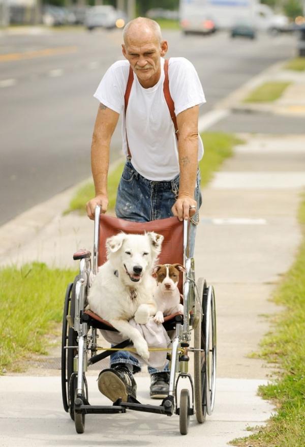 Americano leva cães de estimação para passear em cadeira de rodas
