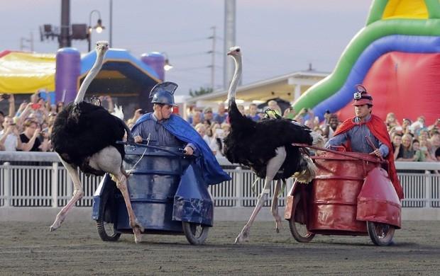 Figurinos curiosos marcam corrida de avestruzes com charrete nos EUA
