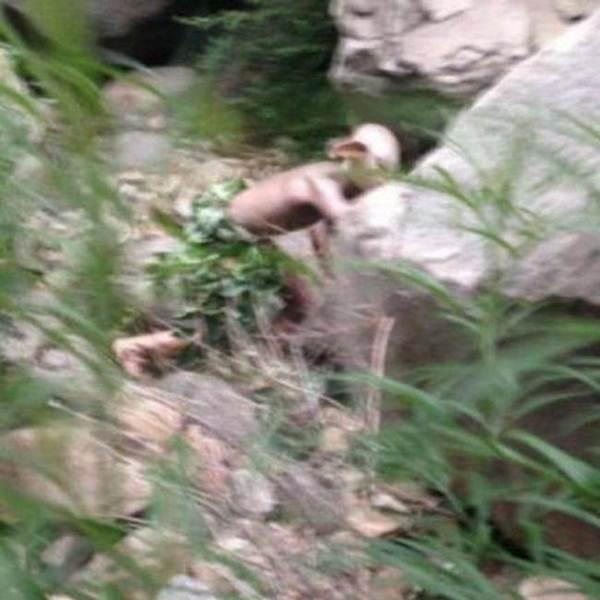Suposta criatura sem pelos é vista em floresta na China. Entenda a história
