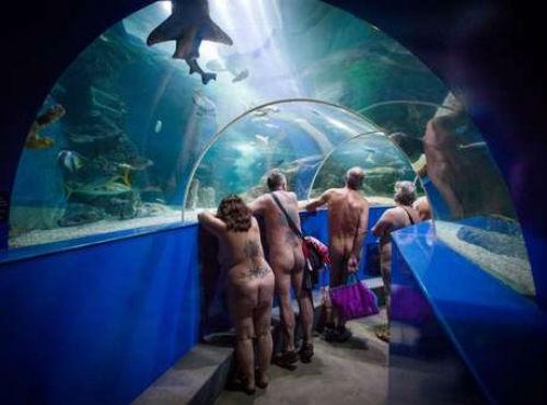 Visitantes nus chamam a atenção em aquário britânico