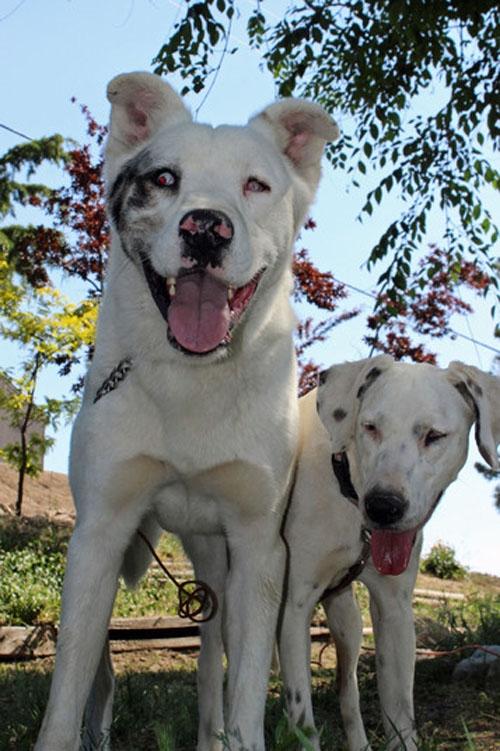 Cães superam as suas deficiências e se ajudam em um abrigo animal