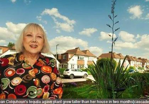 Inglesa fica assustada ao ver que planta do jardim ficou maior que sua casa