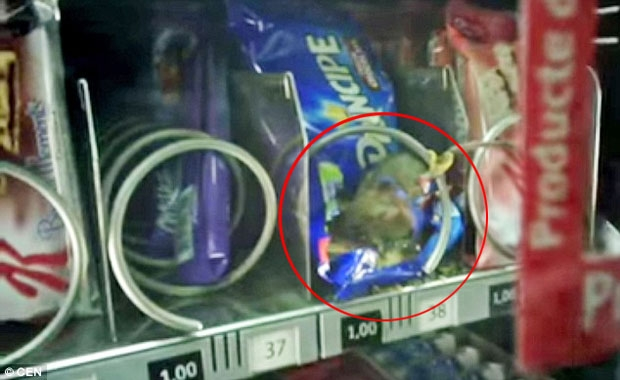 Rato é encontrado dentro de máquina de chocolates