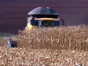 Área colhida com milho chega a 65,8% em Mato Grosso, diz Imea