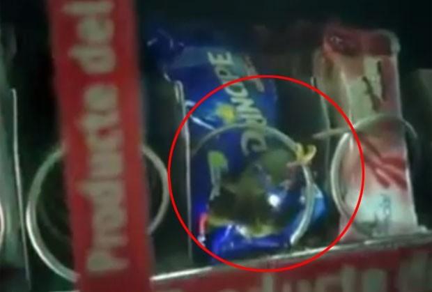 Passageiro flagra rato em máquina de lanches no metrô da Espanha