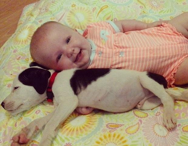 Amizade entre recém-nascida e filhote de pitbull