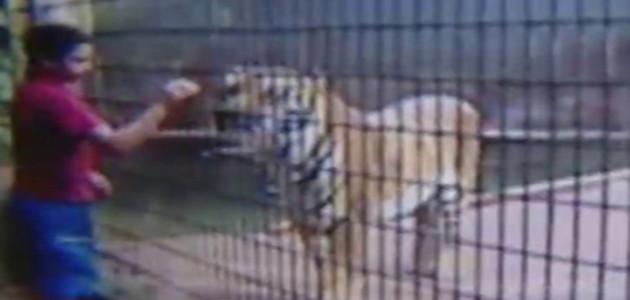 Tigre ataca menino de 11 anos e arranca um dos braços do garoto