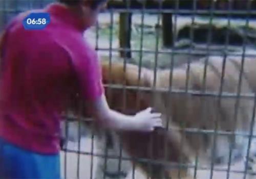 Tigre ataca menino de 11 anos e arranca um bra輟 do garoto