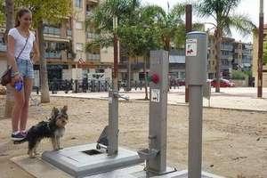 Cidade espanhola instala banheiro público para cachorros