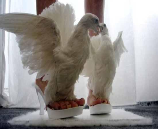 Bom gosto? Designer alemã faz sapatos com os restos mortais de corpos de animais