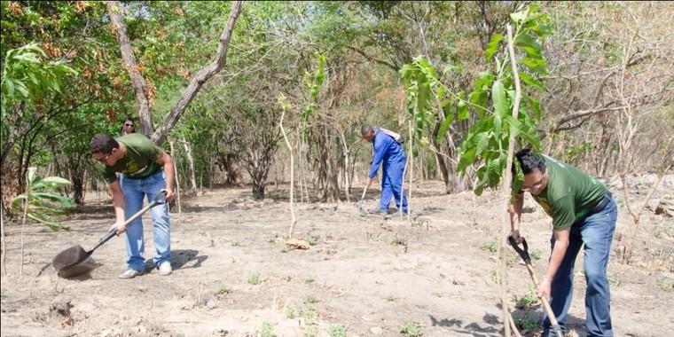Plantio recompõe cerca de  300 mudas do Bosque do Corso