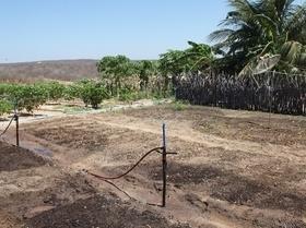 Cisternas garantem cultivo no semiárido