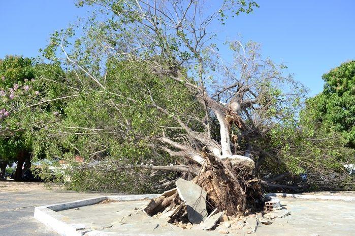 Árvore caída na guarita. (Foto: Kairo Amaral)