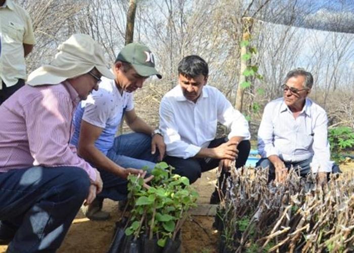Emater incentiva produtores de uva em São João do Piauí