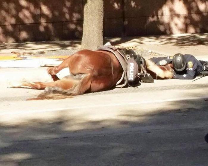 Policial dá força para sua égua, após ela sofrer acidente (Crédito: Reprodução/Houston Police Department)