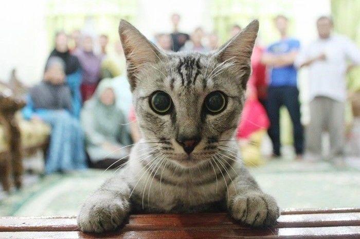 Gato invade foto (Crédito: Reprodução)