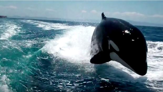 Orca (Crédito: Reprodução/ Youtube)
