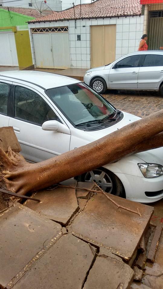 Árvore cai em cima de carro (Crédito: Reprodução)