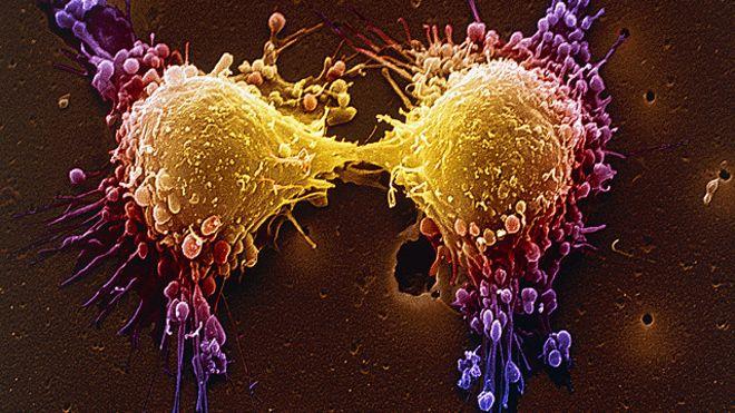 Células suicidas (Crédito: Divulgação)