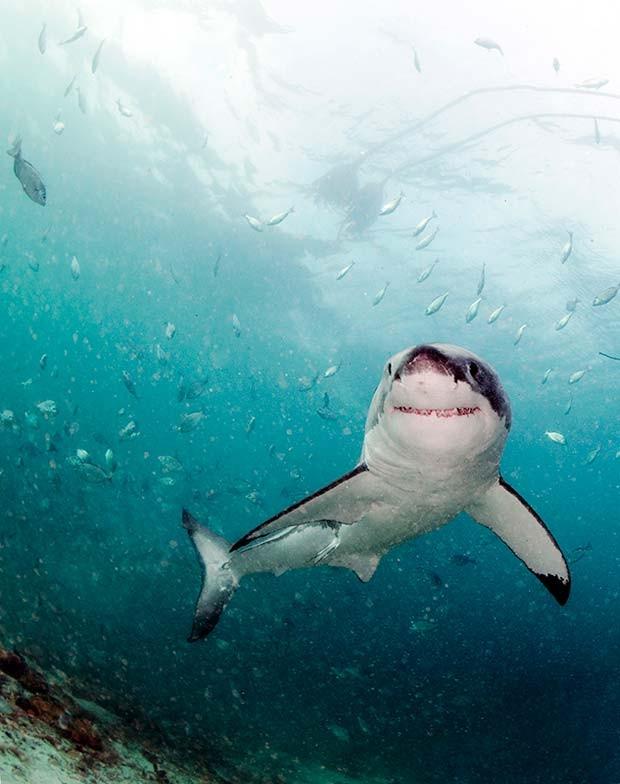 Corredor de tubarões fica a 150 km da Cidade do Cabo, na África do Sul  (Crédito:  Daniel Botelho)