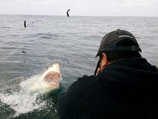 Fotógrafo Daniel Botelho capta tubarão-branco em ação (Crédito:  Daniel Botelho)