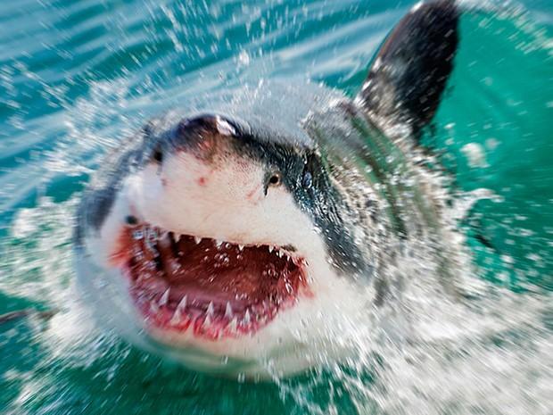 Fotógrafo captou diferentes ângulos do ataque dos tubarões-brancos na África do Sul  (Crédito: Divulgação)