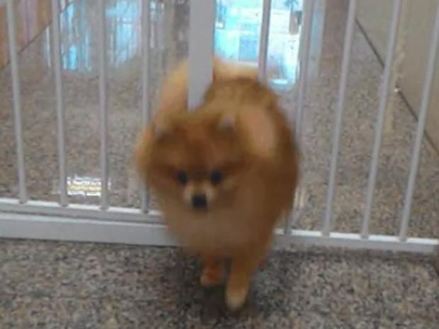 Cachorro passa por barras de ferro (Crédito: Reprodução)