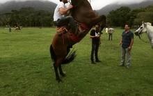 """Rodrigo Lombardi treina para andar de cavalo em """"Velho Chico"""""""