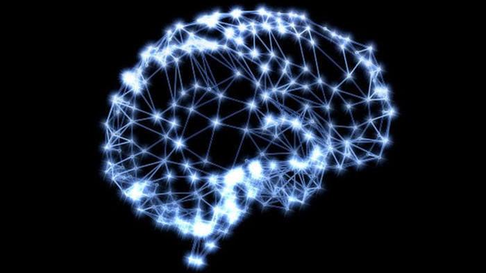 Vasos linfáticos no cérebro (Crédito: Divulgação )