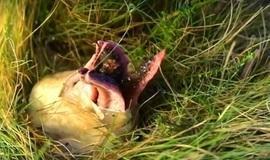 Fungo 'dedos do diabo' lança tentáculos nas pessoas e é assustador