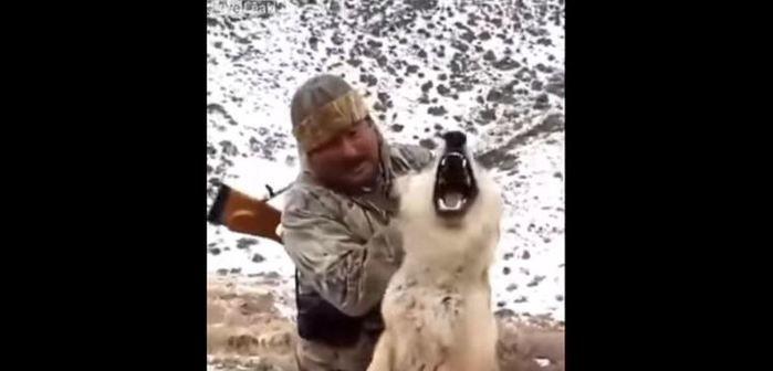 Homem segura o lobo pelas orelhas (Crédito: Reprodução)
