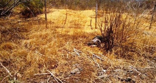 Corpo em avançado estado de decomposição é encontrado na BR-316 (Crédito: Policia Civil)