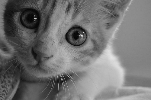 No Dia Mundial dos Gatos, descubra 10 curiosidades sobre essas fofuras - Imagem 3