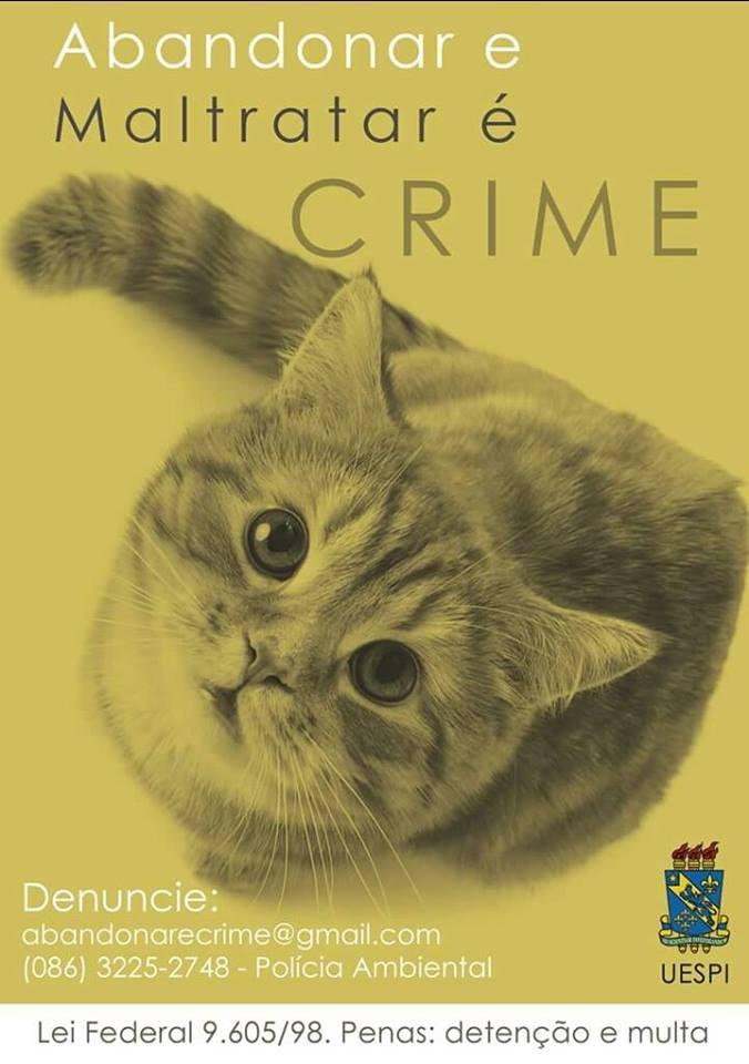 No Dia Mundial dos Gatos, descubra 10 curiosidades sobre essas fofuras - Imagem 5