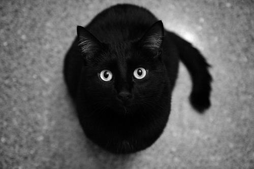 No Dia Mundial dos Gatos, descubra 10 curiosidades sobre essas fofuras - Imagem 4