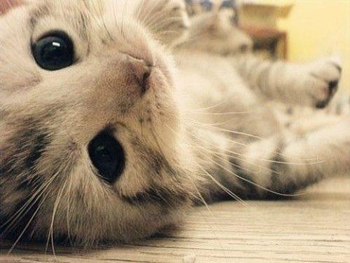 No Dia Mundial dos Gatos, descubra 10 curiosidades sobre essas fofuras - Imagem 1