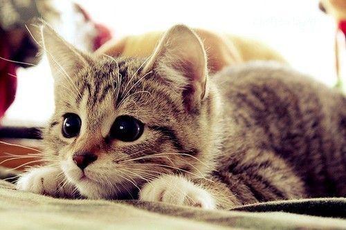 No Dia Mundial dos Gatos, descubra 10 curiosidades sobre essas fofuras - Imagem 2