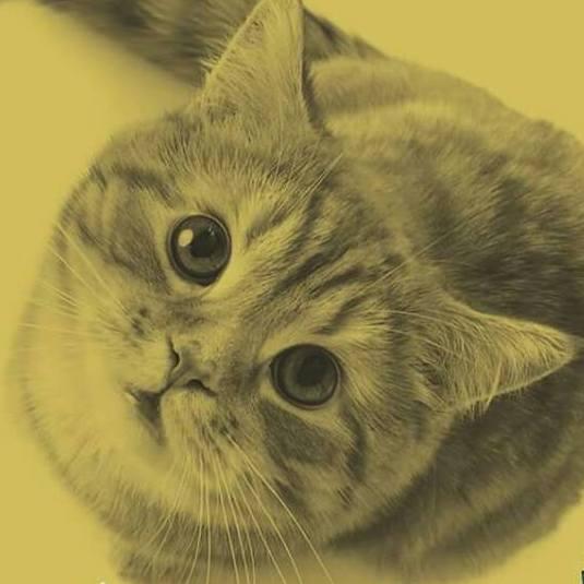 No Dia Mundial dos Gatos, descubra 10 curiosidades sobre essas fofuras