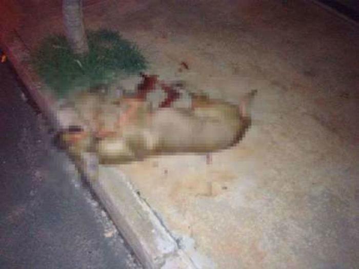 Mulher que matou cão a facadas é multada em R$ 6 mil - Imagem 1