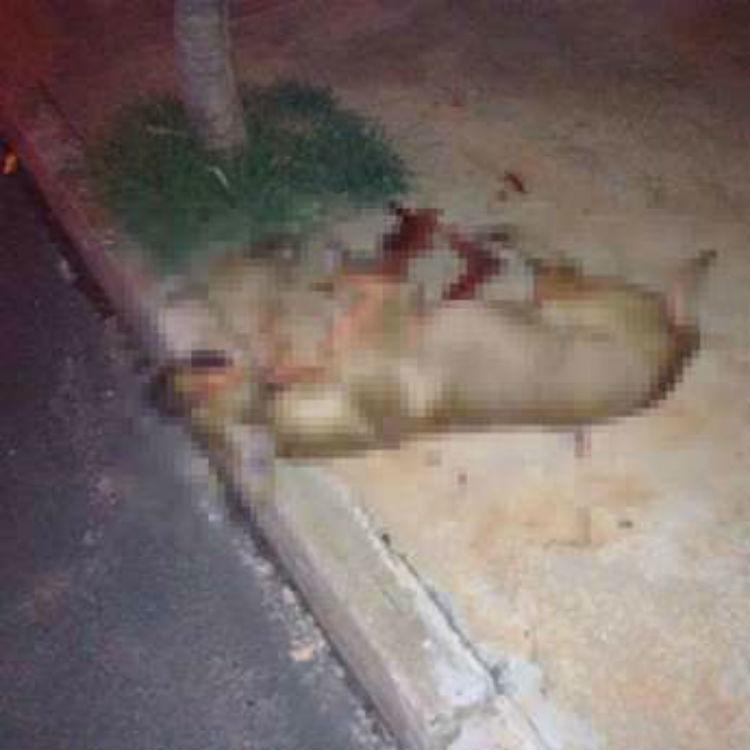 Mulher que matou cão a facadas é multada em R$ 6 mil