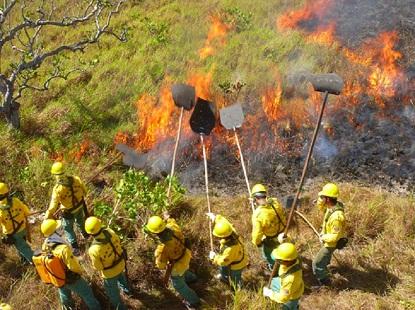 A empresa Suzano colocou uma brigada de incêndio a disposição da população de Parnarama e Matões