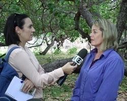 """Rede Globo mostrou o Cajueiro-Rei, orgulho do povo de Cajueiro da Praia"""", comemora prefeita Vânia Ribeiro"""