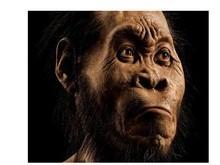Homo naledi pode ajudar a reescrever a história humana