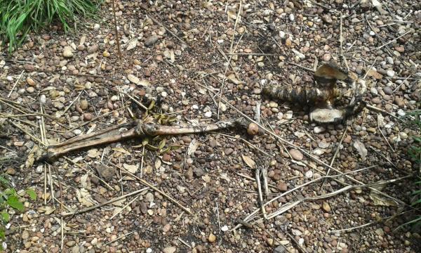 Ossada humana é encontrada em matagal na zona Sul de Teresina