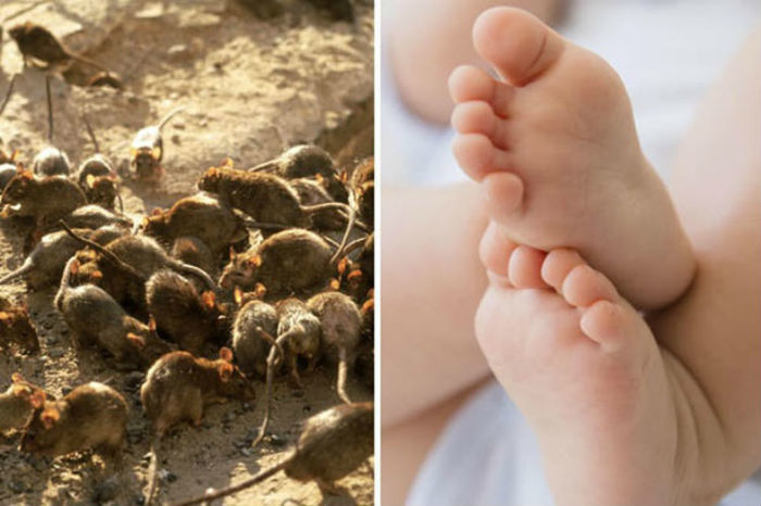 Criança foi comida viva por ratos