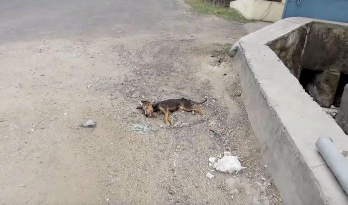 Cachorrinha resgatada (Crédito: Reprodução)