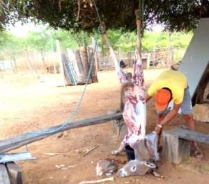 Homem abate jumento (Crédito: Divulgação )