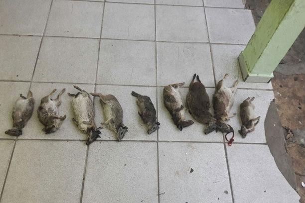 Animais apreendidos com os três caçadores